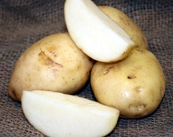 5 lb Kennebec SEED POTATOES