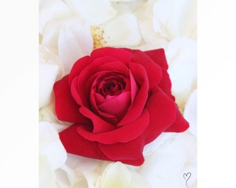 "Red Rose Art Print, rose art print, modern wall art, red wall art, fine art, rose picture, ""Bed of Roses"""