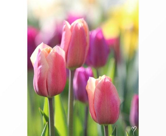 "Flower Photograph, Peach Wall Art, Flowers, Fine Art Photograph ""Peach and Purple Tulips"""