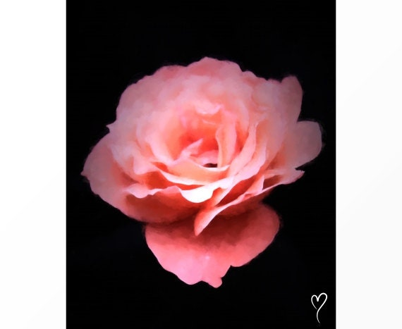 "Modern Art, Original Fine Art Print of a Pink Rose, Flower Wall Art, Home Decor, Pink Art Print, Birthday Gift, ""The Elegant Rose"""