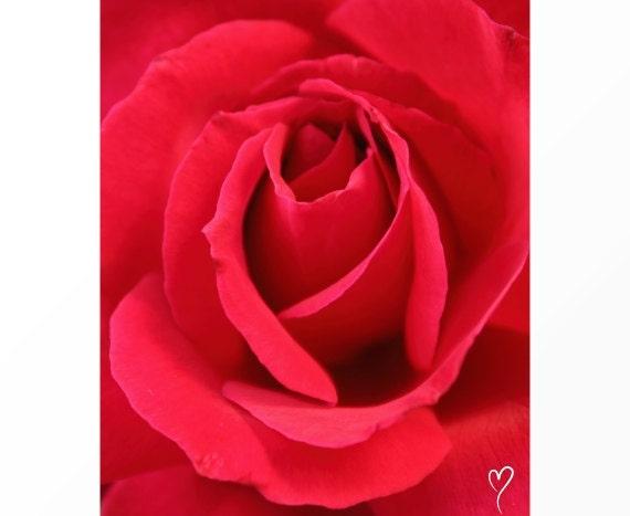 """Red Wall Art, Rose Art, Signed Original Fine Art Print, Home Decor, Flower Art, Red Wall Decor """"Secret of Love"""""""