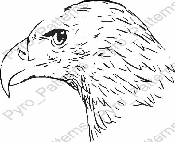 Pyrography wood burning bald eagle head bird pattern for Pyrography templates free