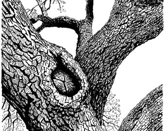 Instant download, high-quality pen & ink drawing: live oak tree.
