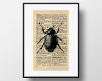 Beetle illustration on Dictionary page - Art print on Encyclopedia page - Wall Art Home Decor - FB069