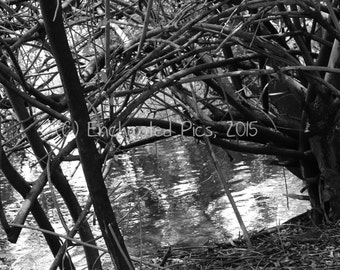 Lakeside Photography: Branches Over the Water 2- nature photography, lake, ripples, black and white, trees, branches