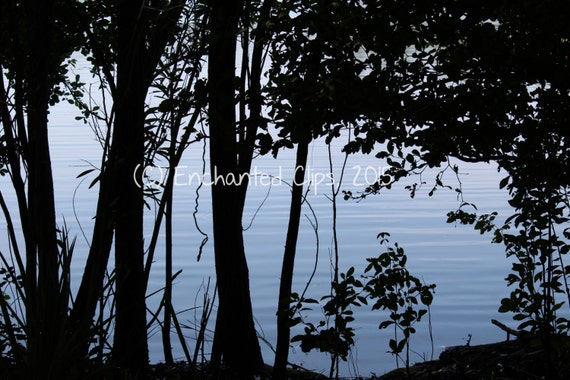 Lakeside Photography: The Water Through the Trees- nature photography, trees, lake, shadows, silhouette