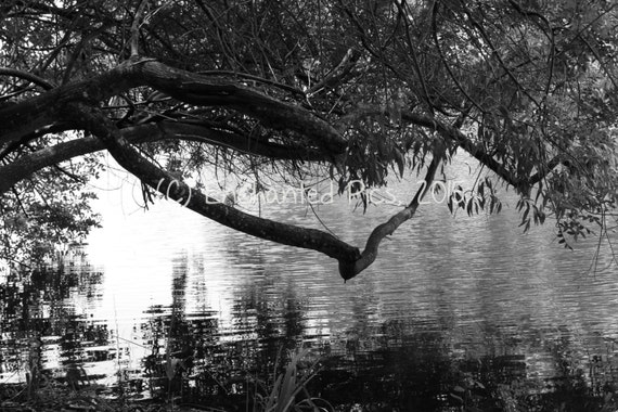 Lakeside Photography: Branches Over the Water- nature photography, lake, ripples, black and white, trees, branches