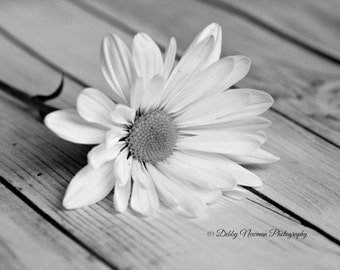 Daisy Photography Print Fine Art Photography wall decor Still Life Photography daisy bedroom decor romantic black and white