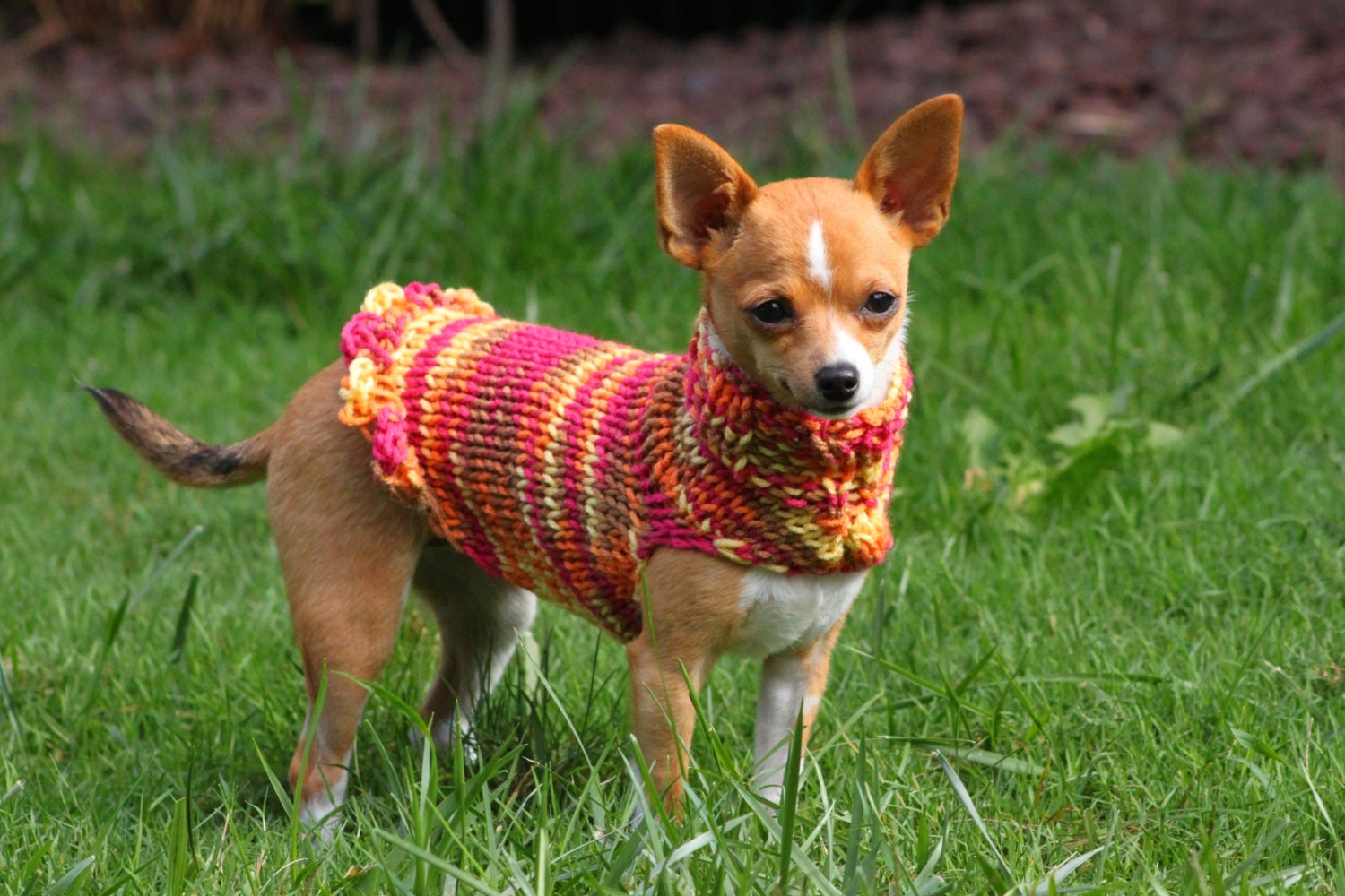 teeny tiny collection chihuahua sweater chihuahua clothing. Black Bedroom Furniture Sets. Home Design Ideas