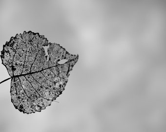 Leaf photo, Autumn/Fall Photography.