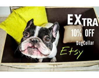 SALE! Dog COLLAR -10% For Your Buy