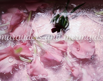 Flowers in Frozen Water Photograph, Pink, Flowers, Ice