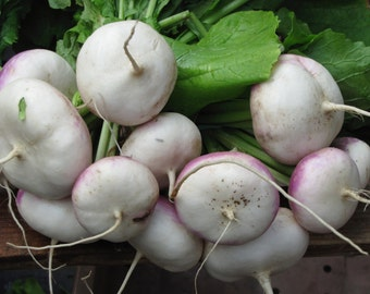 Return from the market: turnips!