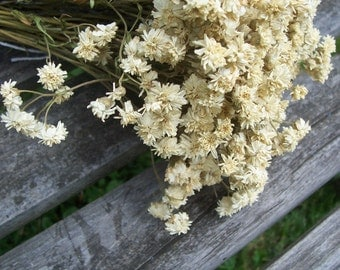 Dried Flowers, Pearl, white.  Arrangements, bouquets, craft supplies, preserved flowers.