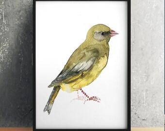 Nursery art Greenfinch print Cute bird watercolor ACW102