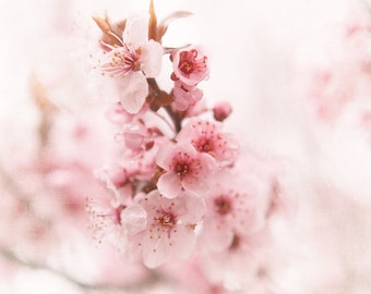Pink Flower Photography, Spring Flowers, Pastel Flowering Tree, Nursery Art, Dreamy Pink Bedroom Decor, Shabby Chic