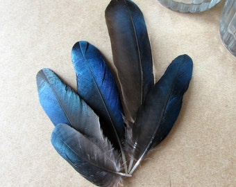 Magpie Feathers (Small Blue Wings)