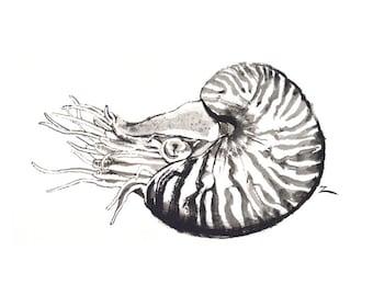 Nautilus Ink Painting 16x20 Fine Art Giclee Print