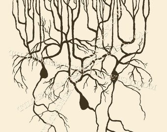 Neuron Purkinje Cell Brain Neuroscience Dance Dancer Science Art Psych Psychology Psychiatry Ink Print
