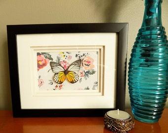 Redspot Sawtooth Butterfly