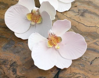 Sugar orchid orchid.