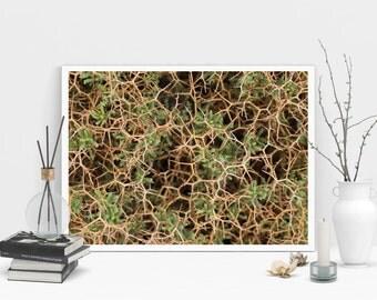 Sarcopoterium Spinosum Color Macro Nature Photo