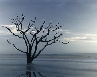 Wall Art Photography Edisto Island // Botany Bay //Ocean Photography // The Boneyard // South Carolina Photography // Dead Tree in Ocean