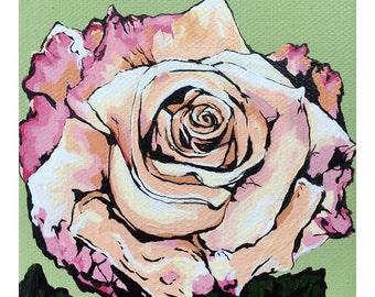 Sorbet Rose Bloom