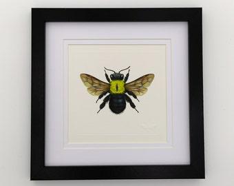 Great Carpenter Bee Unframed Miniature Print x 1