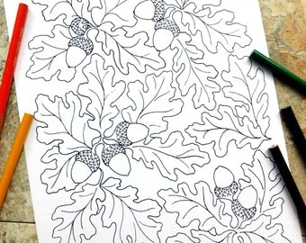 Autumn, coloring pages, thanksgiving, fall, oak leaf, acorn, leaves, nature, live oak