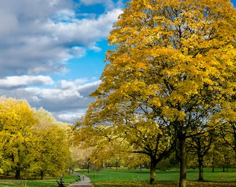 Nature Photography, Park in London, England, Matted on White
