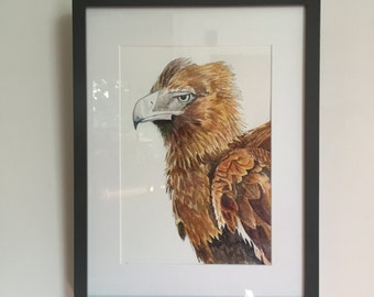 Wedge-tailed Eagle - Fine Art Giclée print of an Australian wedge-tailed eagle