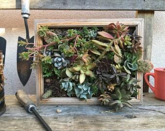 succulent frame art/ vertical garden
