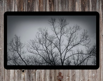 Winter Tree Photo, Tree Photo, Nature Photo, Backlit Tree Photo, Woods Photo, Tree Photo, Tree Branches Photo, Branches Photo, Nature