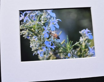 Foraging Bee Photo