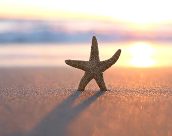 Summer Starfish Beach Print Boho Wall Art San Diego Photography Sunset Photos Bright Colorful Art Happy Girl Bedroom Decor Gift For Her