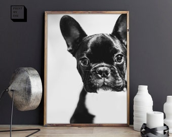 French Bulldog Print, Frenchie Print, French Bulldog Wall Art, Dog Photo, Black and White print, Dog Print, Instant Download, Dog Wall Art