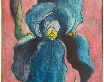 Bearded Blue Iris, monoprint