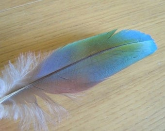 Multicolored rainbow macaw feather