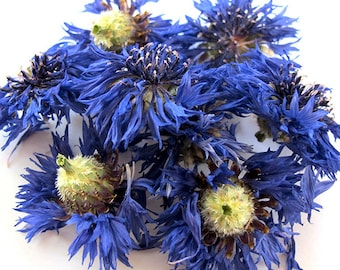 Cornflower Bachelor's Buttons Dried Herb - Organic or Naturally Cultivated 0.25 oz - Love, Find a Romantic Partner Magick and Spellwork