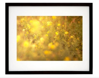Flowers photograph, color photography, colourful, yellow, nature photograph