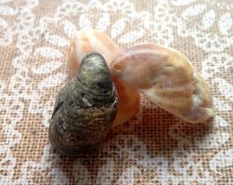 Sea Shells, Seashell Crafts, Seashell Decor, Bulk Seashells, Snail Shells, Shell Earrings, Sea Shell Jewelry, Shell Pendants, Shell Charms,