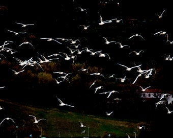 Seagulls in flight, Photography, Digital print fine art, Wall decor. Gabbiani in volo, stampa digitale fine art