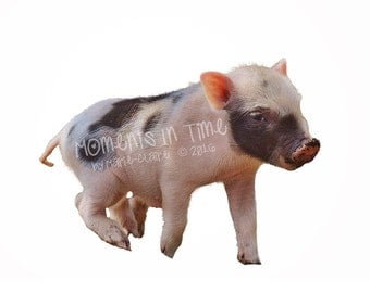 Moments In Time Pink and Black Piglet Animal Overlay