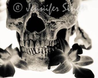 Skull & Orchids