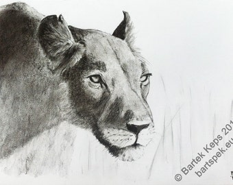 original lioness head charcoal drawing, lioness painting, animal art, lioness art, custom animal art, animal book art, lion ilustration