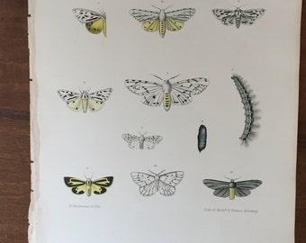 Butterfly Paper Ephemera Art