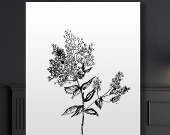Botanical Giclee Art Print of ink illustration, Mimosa