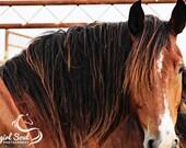 "Horse ""Rugged"" Fine Art Print, Wild Horse Art, Rodeo Fine Art, Western Fine Art, Cowboy, Cowgirl Fine Art, Canvas, Home Decor, Wall Art"