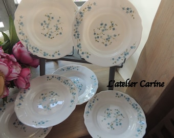 6 plates hollow veronica arcopal model forget-me-not, myosotis model, french vintage